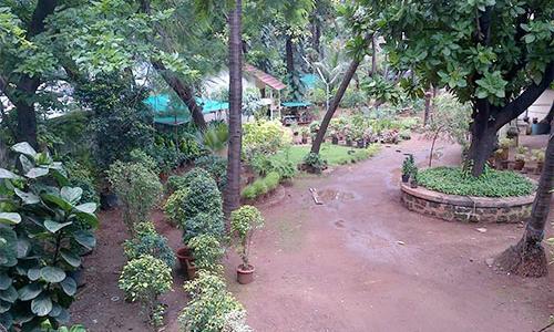 Plants World Garden Centre